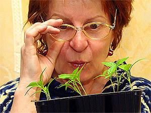 Иногда из купленных семян вырастает нечто совсем неожиданное...