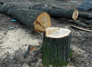 договор купли продажи леса кругляка образец